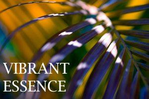vibrant essence iii - gallerie