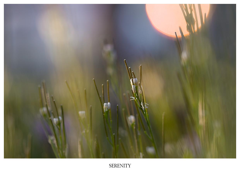 Serenity Nahaufnahme einer schönen Landschaft mit Sonnenuntergang