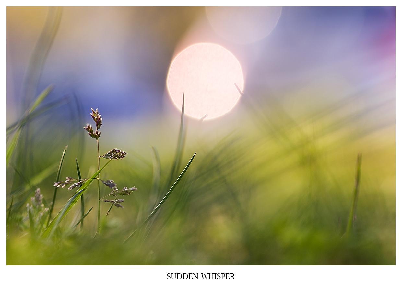 SUDDEN WHISPER Nahaufnahme eines wunderbaren Sonnenuntergangs in Bodennähe in osa, violet und lila Tönen