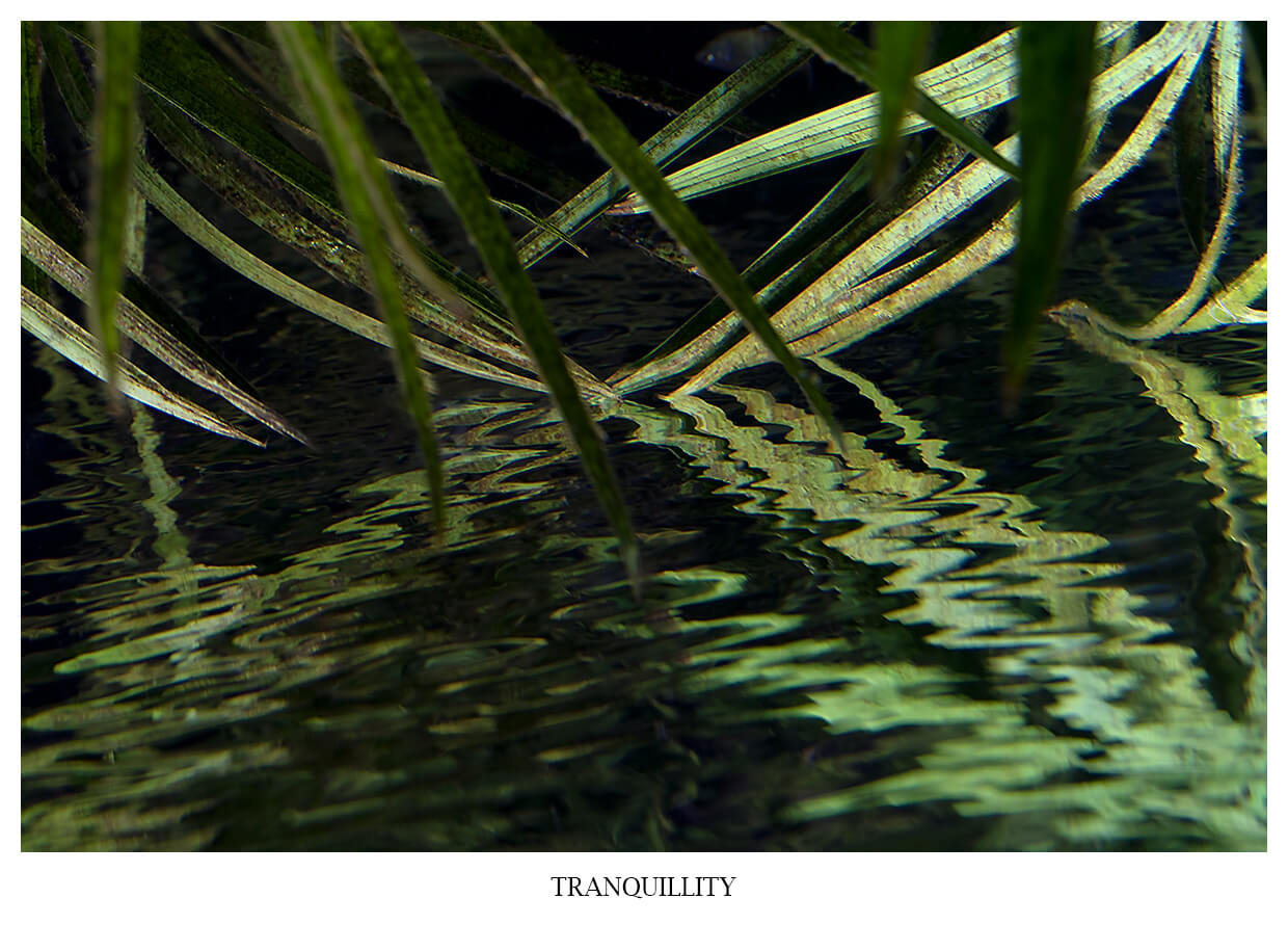 TRANQUILITY TRANQUILITY Portfolio image Series VIBRANT ESSENCE reflecting seeblades in the water