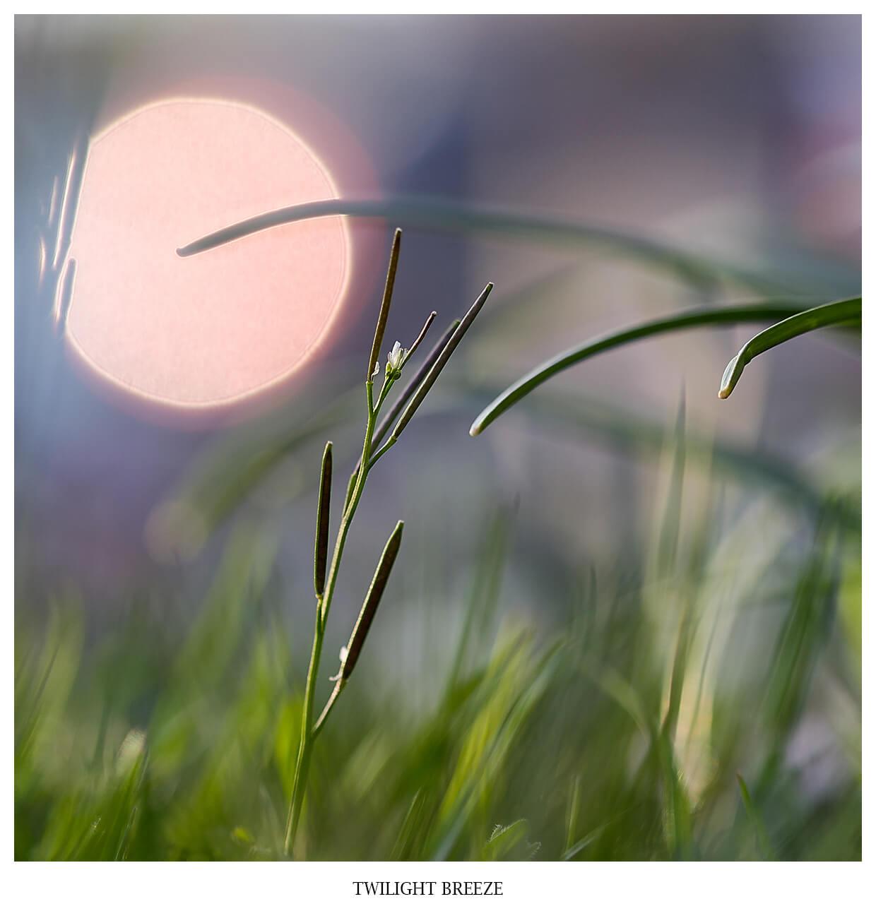 TWILIGHT BREEZE, eine Nahaufnahme eines Sonnenuntergangs in violet und rosa Tönen