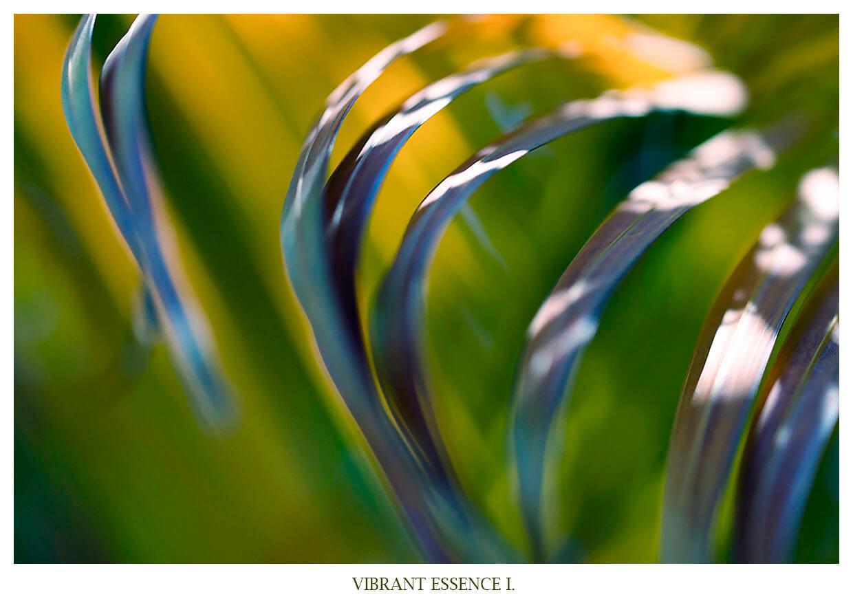 VIBRANT ESSENCE I Portfolio Anett Bulano abstrakte abstraktion von Palmenblättern, fotografiert auf Bali Indonesien