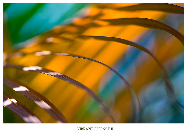 VIBRANT ESSENCE II PortfolioAnett Bulano abstrakte abstraktion von Palmenblättern, fotografiert auf Bali Indonesien