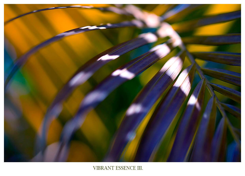 VIBRANT ESSENCE III Portfolio Bild eines Palmenblatts mit gelb blauer reflektion