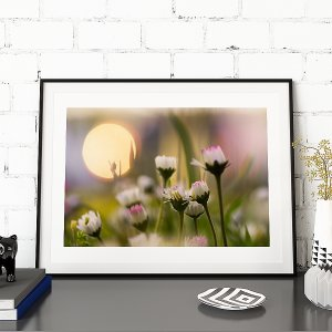 FAINTLY SWEET nature photography of a daisy flower meadow at sunset