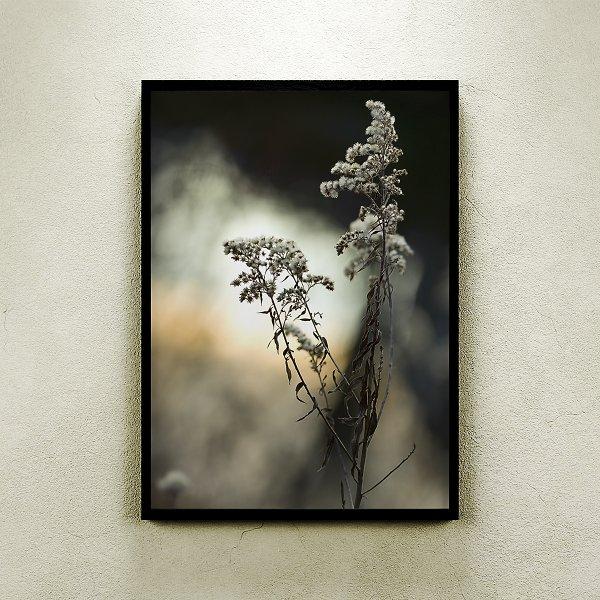 HELLO DARKNESS NATURE PHOTOGRAPHY FINE ART PRINT